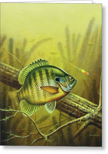 Bluegill And Jig Greeting Card by JQ Licensing