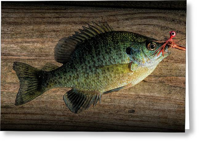 Bluegill Panfish Caught With A Jig Greeting Card by Randall Nyhof