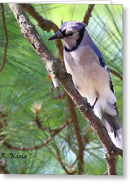 Bluejay Greeting Card by Roena King