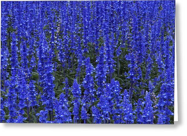 Blues 1 Greeting Card by Alan Kepler