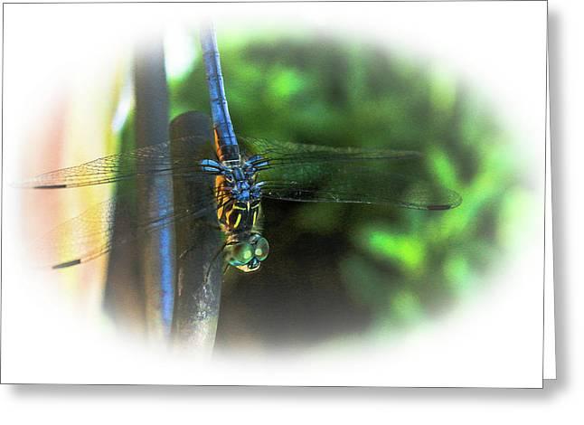 Blue-eyed Dragonfly Greeting Card