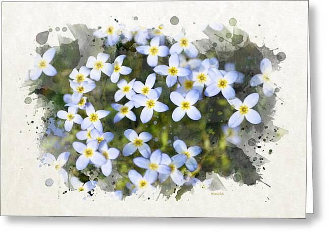 Bluet Flowers Watercolor Art Greeting Card