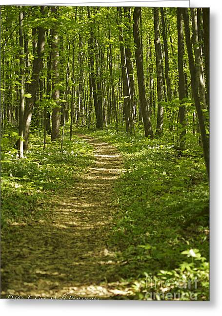 Bluff Trail Awenda Provincial Park Greeting Card by Elaine Mikkelstrup