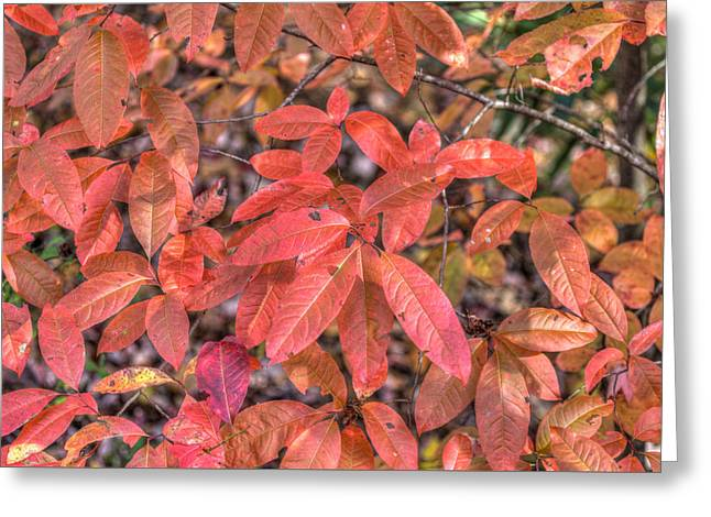 Greeting Card featuring the photograph Blush Of Color by Paul Schultz