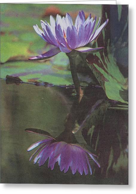 Blush Of Purple Greeting Card