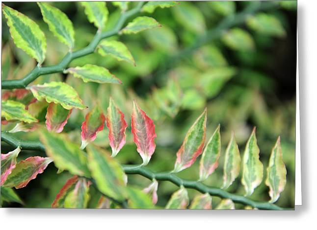 Blushing Leaves Greeting Card by Jessica Rose
