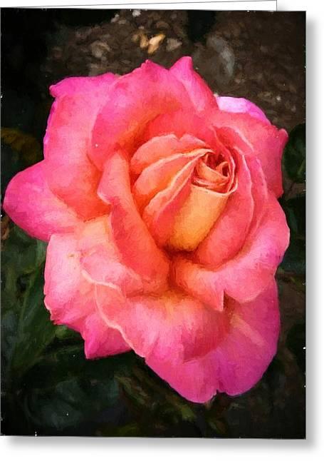 Blushing Rose Greeting Card