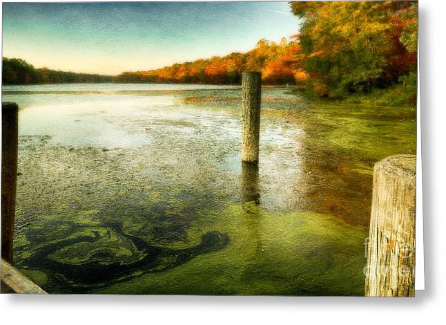 Blydenberg Park In The Fall Greeting Card
