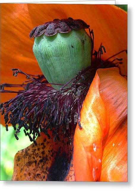 Boa And Bonnet Of Madame Poppy Greeting Card