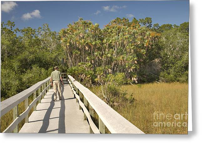 Boardwalk Through The Everglades Greeting Card by Inga Spence