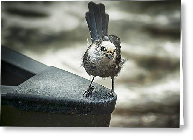 Boat Sparrow Greeting Card