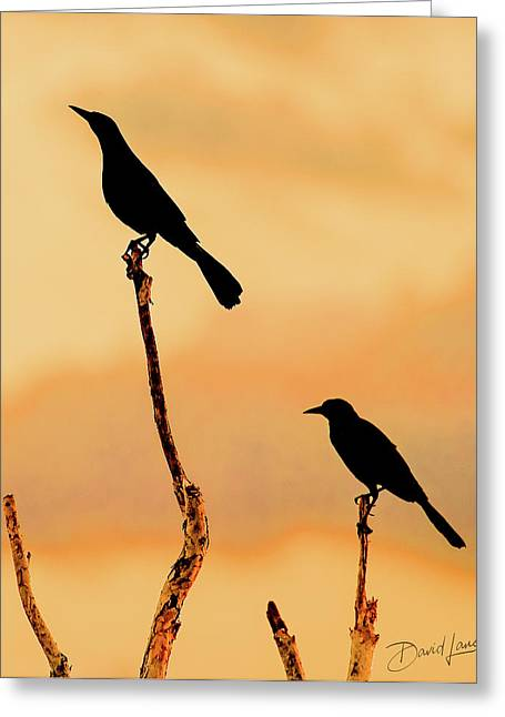 Boat Tailed Grackles Greeting Card