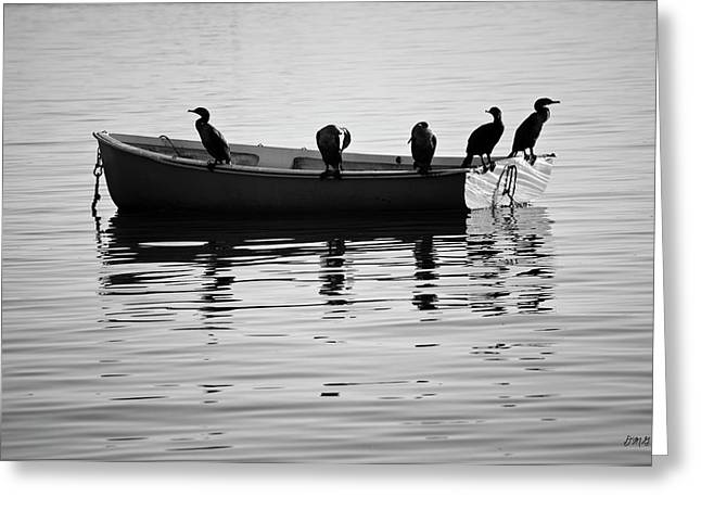 Boats And Cormorants Plymouth Harbor Bw Greeting Card by David Gordon