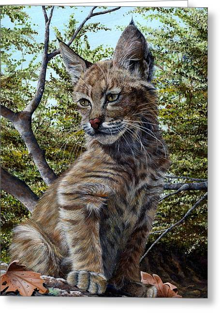 Baby Bobcat Greeting Cards - Bobbi Anne Greeting Card by Peggy Sircy