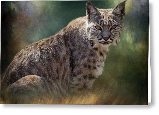 Bobcat Gaze Greeting Card