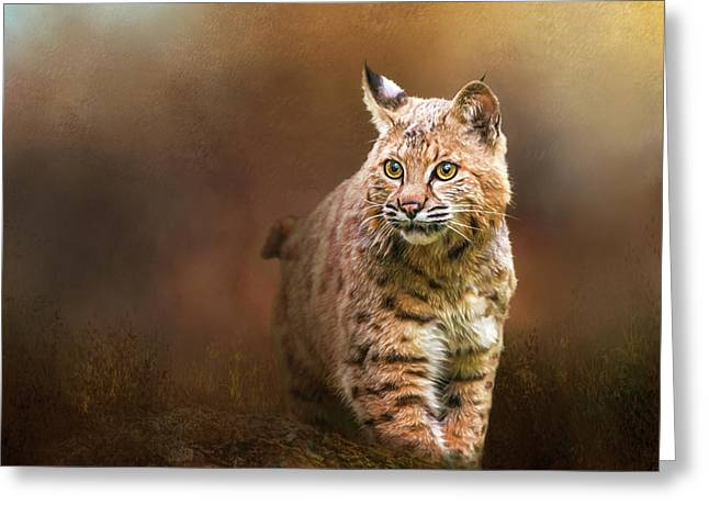Bobcat I Greeting Card by Susan Carter