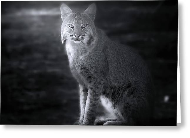 Bobcat In The Mist Greeting Card