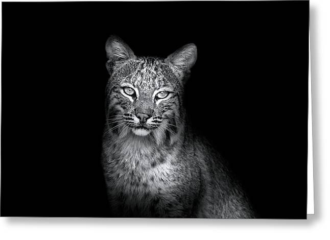 Bobcat In The Wild Greeting Card