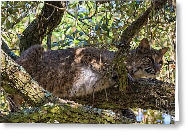 Bobcat Living High Greeting Card by Bill And Deb Hayes