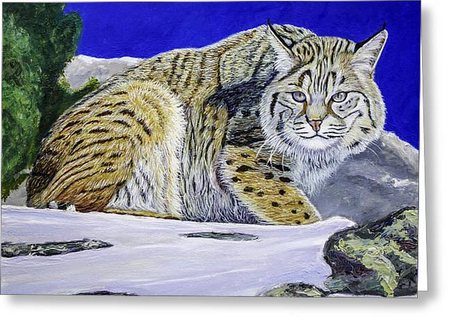 Bobcat Greeting Card by Manuel Lopez