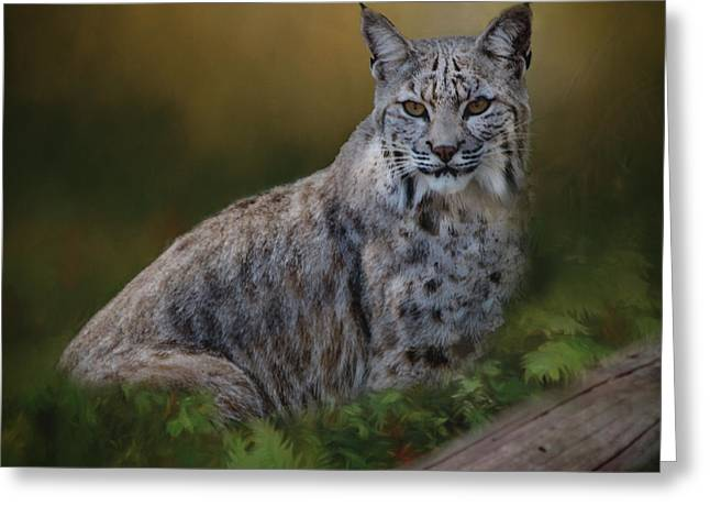 Bobcat On Alert Greeting Card
