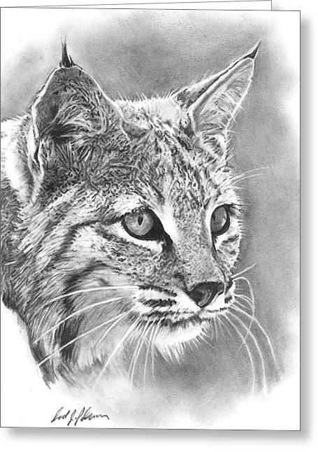 Bobcat Greeting Card by Reed Palmer