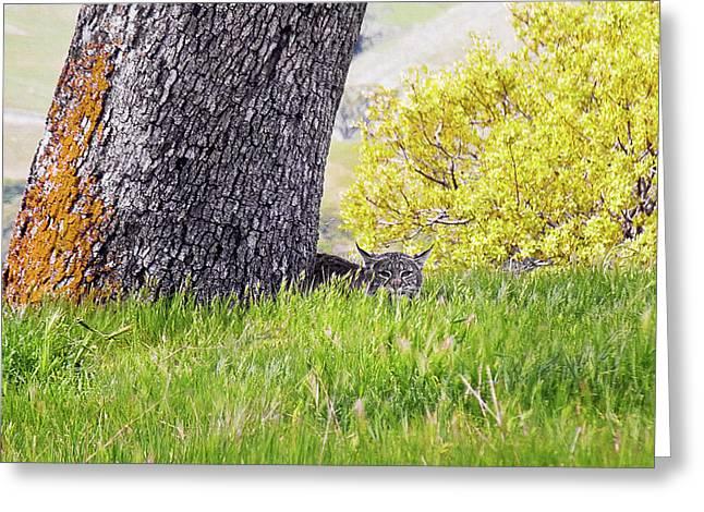 Bobcat Watch Greeting Card by Karen  W Meyer