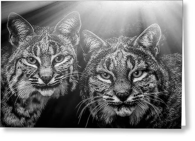 Bobcats Greeting Card by Elaine Malott