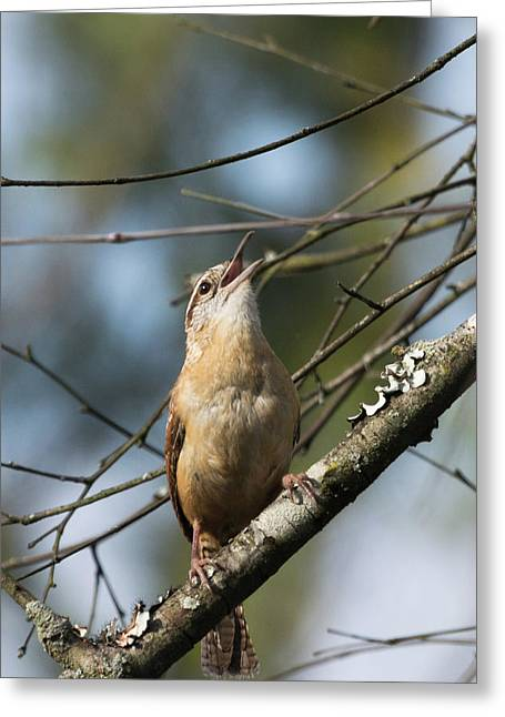Bobolink Singing Greeting Card