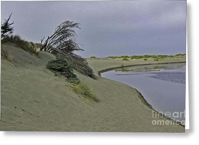 Bodega Dunes Greeting Card