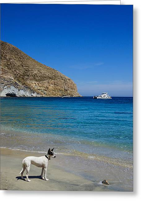 Bodeguero On The Beach Greeting Card by Digby  Merry