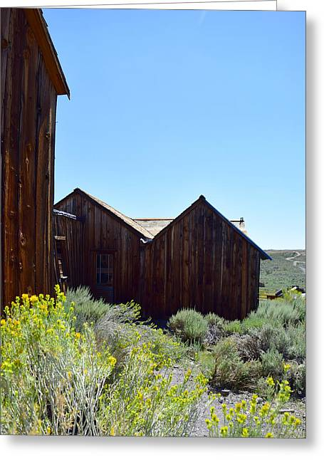 Bodie In Bloom Greeting Card