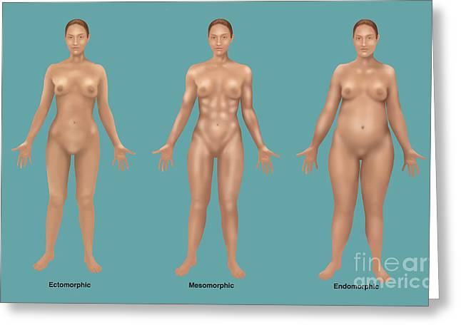 Body Types Greeting Card