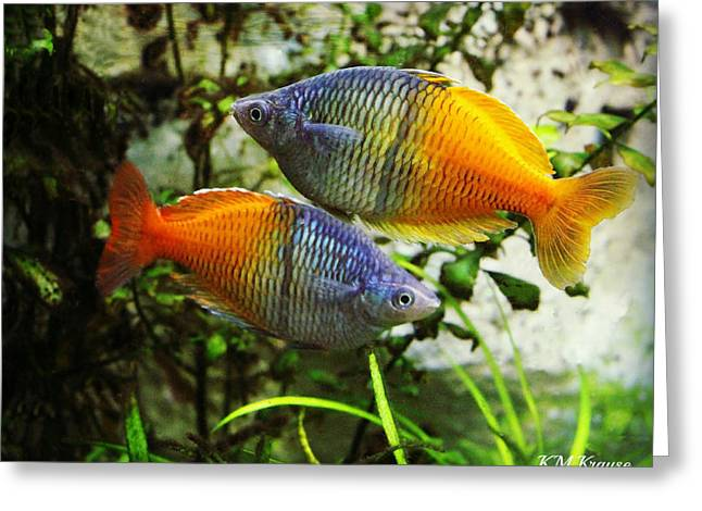 Boeseman's Rainbowfish Greeting Card