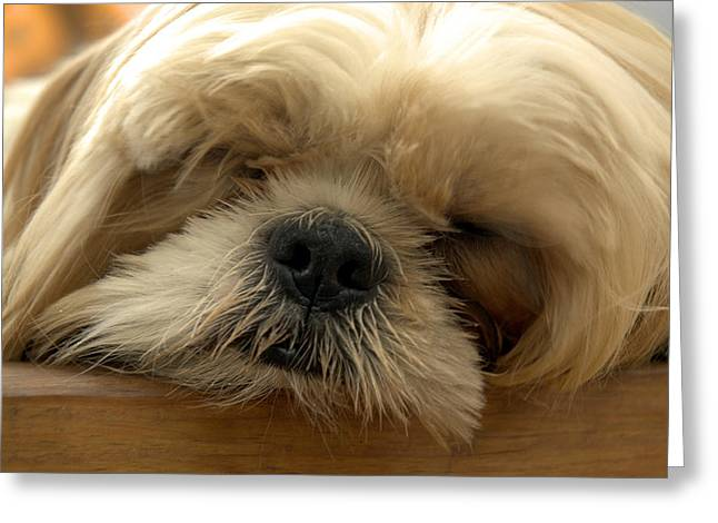 Bogie Asleep Greeting Card