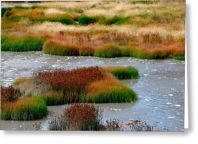 Boiling Mud And Grass Greeting Card