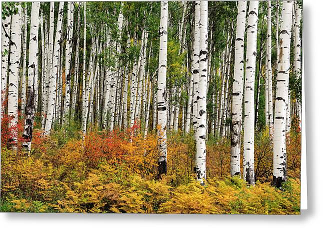 Greeting Card featuring the photograph Bold And Magnificent Autumn by Tim Reaves