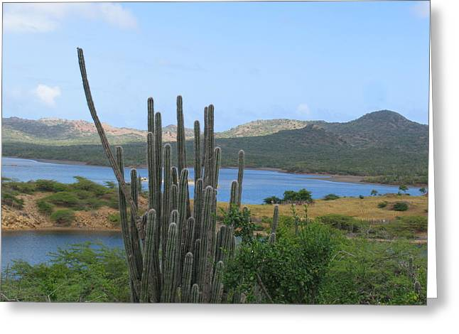 Bonaire Light Greeting Card by Arry Murphey