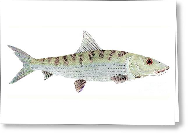 Bonefish Greeting Card