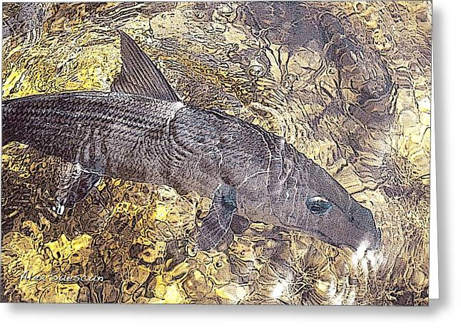 Tarpon Drawings Greeting Cards - Bonefish World Greeting Card by Alex Suescun