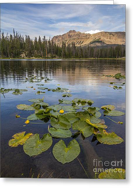 Bonnie Lake And Hayden Peak Greeting Card