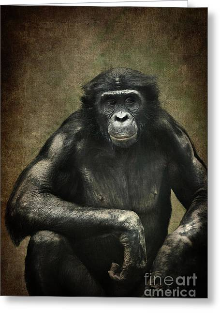 Bonobo Greeting Card by Angela Doelling AD DESIGN Photo and PhotoArt