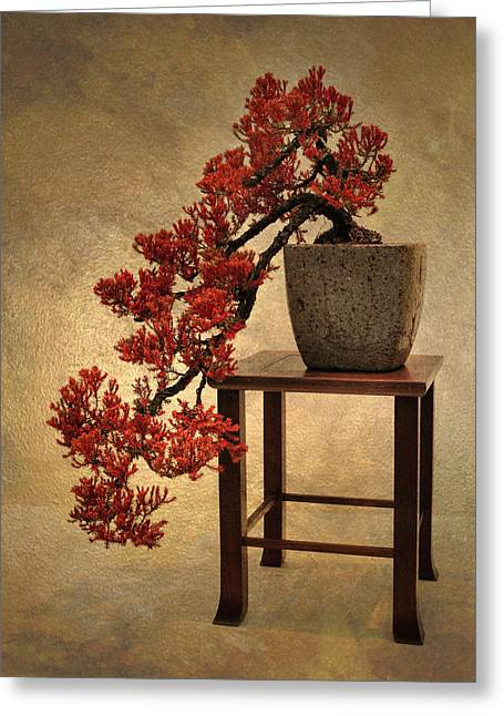 Bonsai Beauty Greeting Card