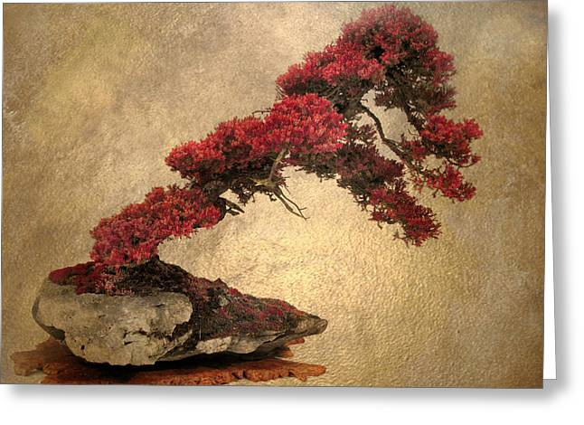 Bonsai Display Greeting Card