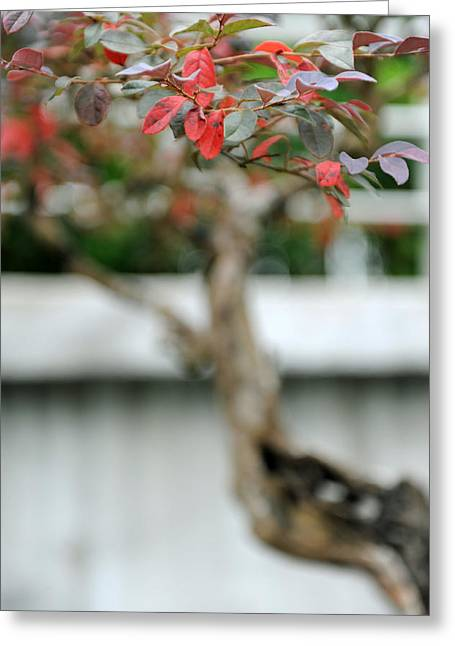 Bonsai Greeting Card by Jessica Rose