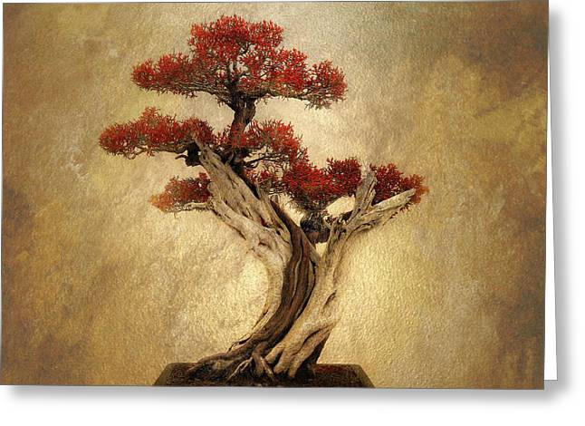 Bonsai Pine Greeting Card