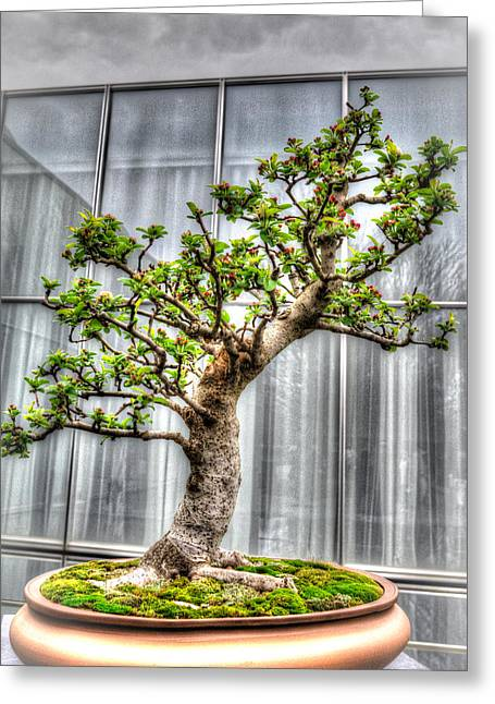 Bonsai Tree II Greeting Card by Wade Brooks