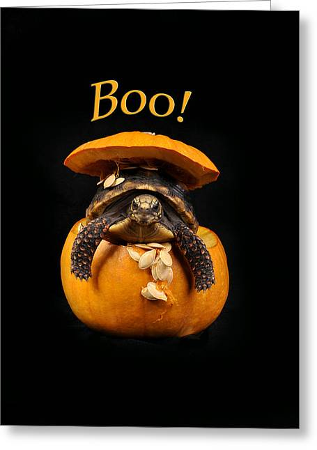 Surprise Greeting Cards - Boo Halloween Turtle Greeting Card by Rebecca Brittain