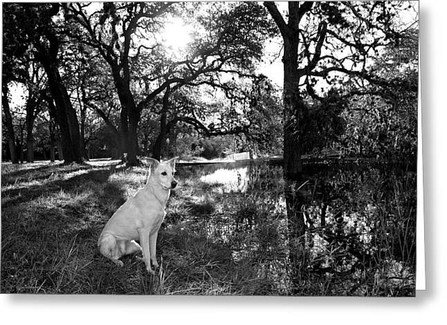 Boo Ranch Dog Greeting Card by Jimmy Bruch