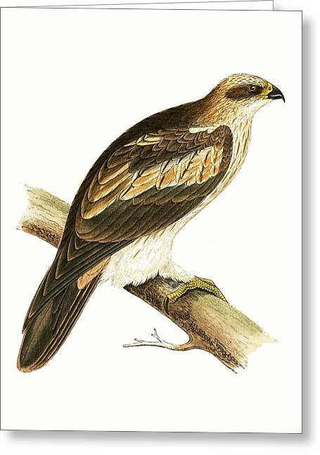 Booted Eagle Greeting Card